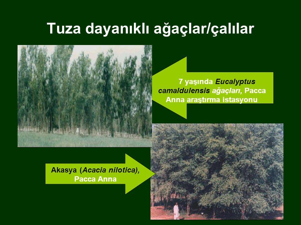 Tuza dayanıklı ağaçlar/çalılar