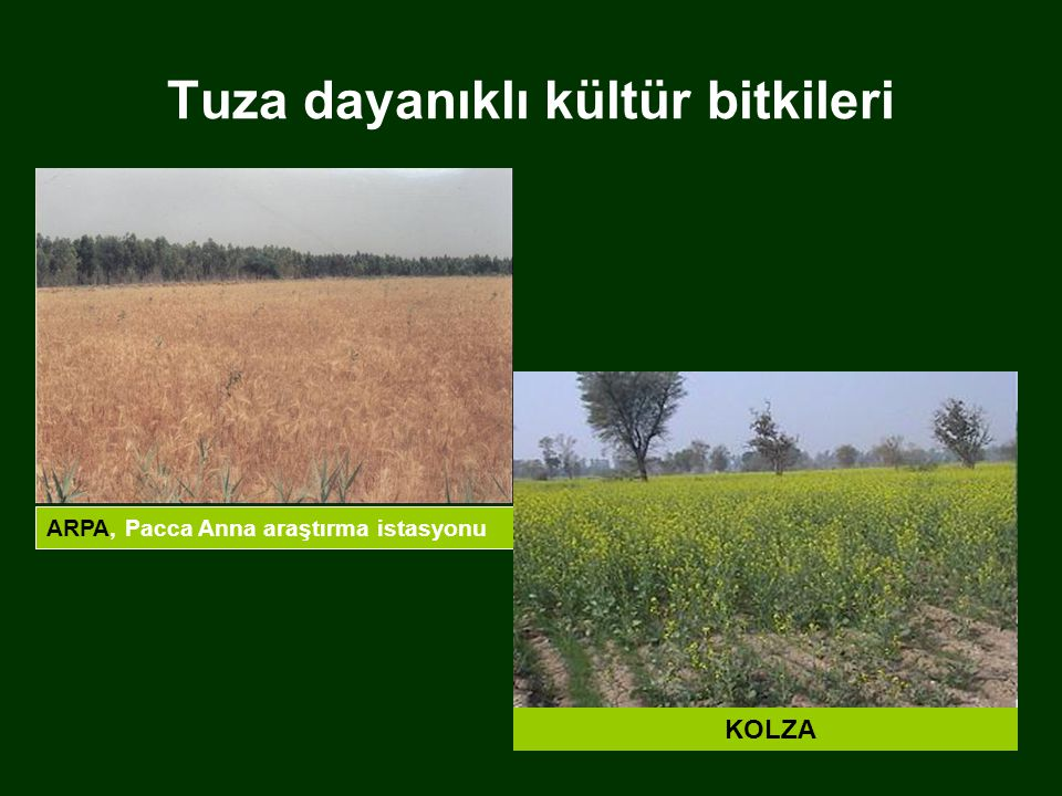 Tuza dayanıklı kültür bitkileri