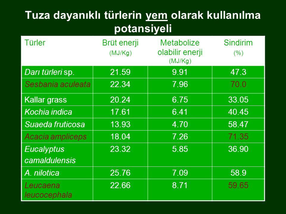 Tuza dayanıklı türlerin yem olarak kullanılma potansiyeli