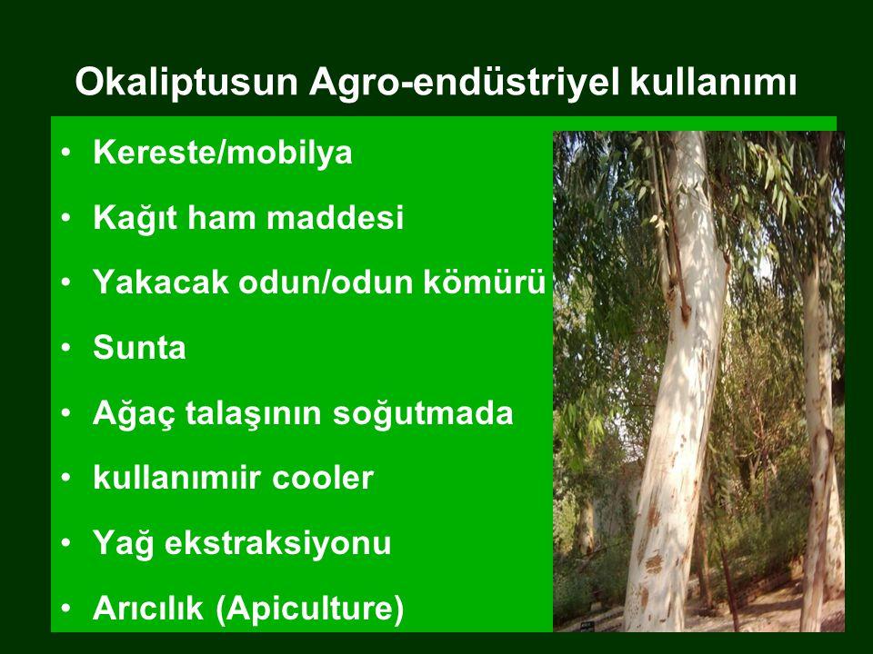 Okaliptusun Agro-endüstriyel kullanımı