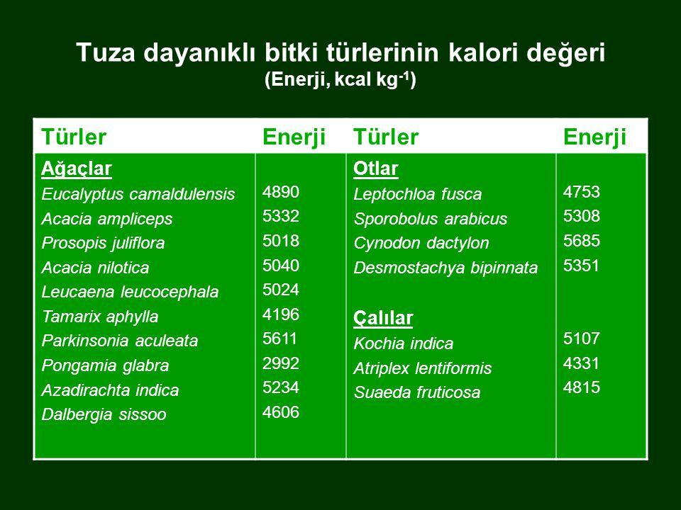 Tuza dayanıklı bitki türlerinin kalori değeri (Enerji, kcal kg-1)
