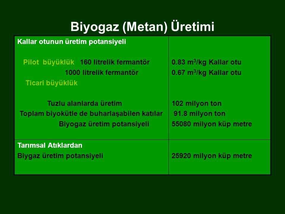 Biyogaz (Metan) Üretimi