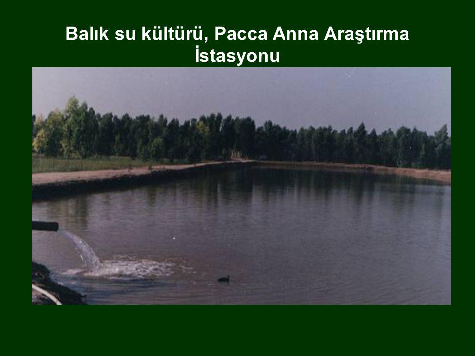 Balık su kültürü, Pacca Anna Araştırma İstasyonu