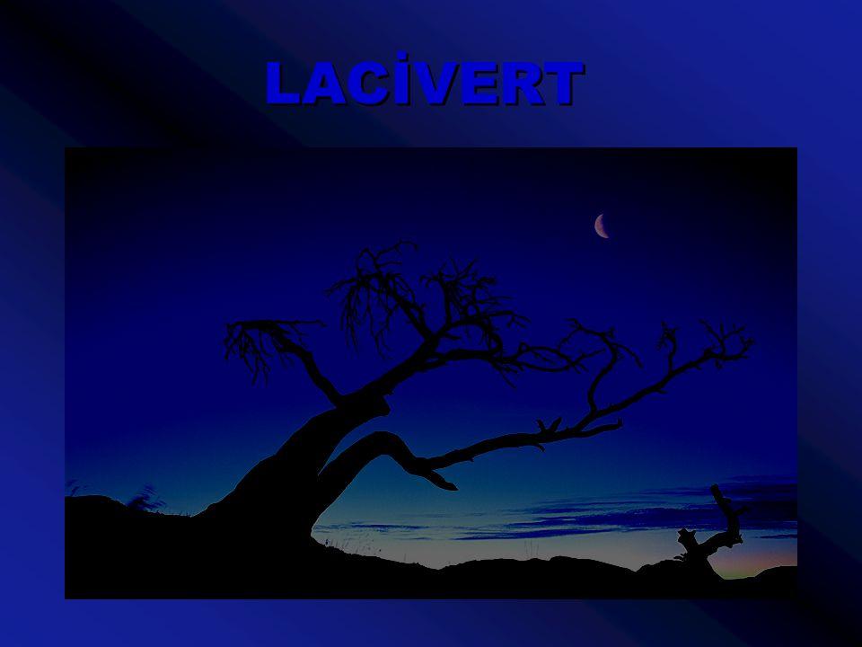 LACİVERT Günler, geceye dönüşürken gökyüzüne rengi ben veririm.