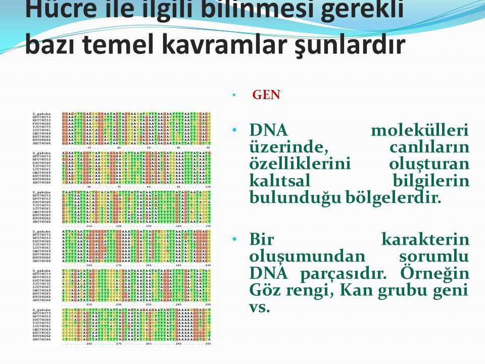 Hücre ile ilgili bilinmesi gerekli bazı temel kavramlar şunlardır