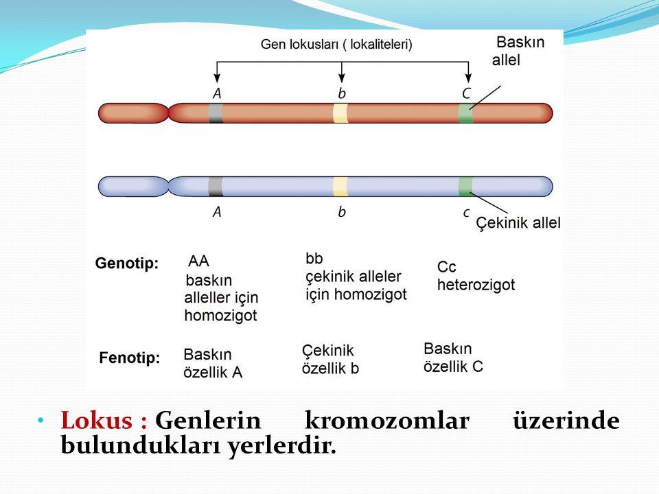 Lokus : Genlerin kromozomlar üzerinde bulundukları yerlerdir.