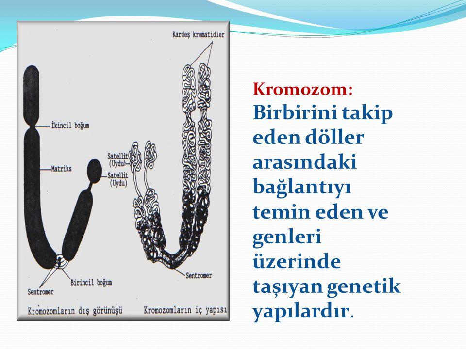Kromozom: Birbirini takip eden döller arasındaki bağlantıyı temin eden ve genleri üzerinde taşıyan genetik yapılardır.