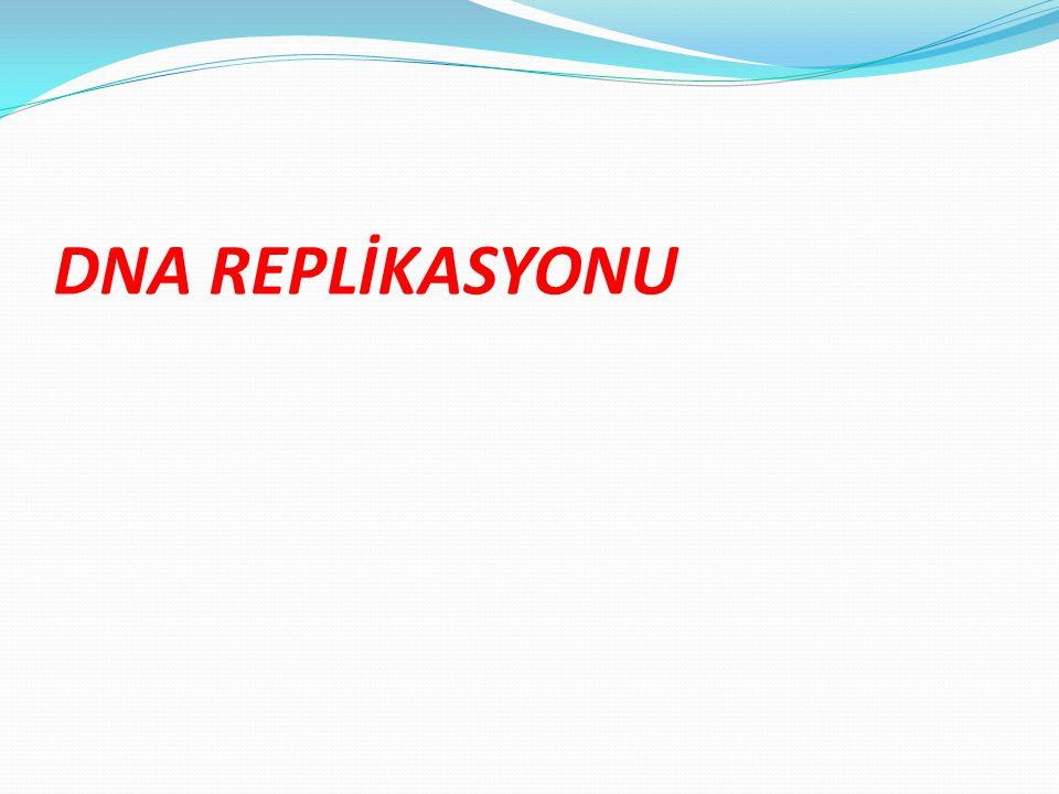 DNA REPLİKASYONU