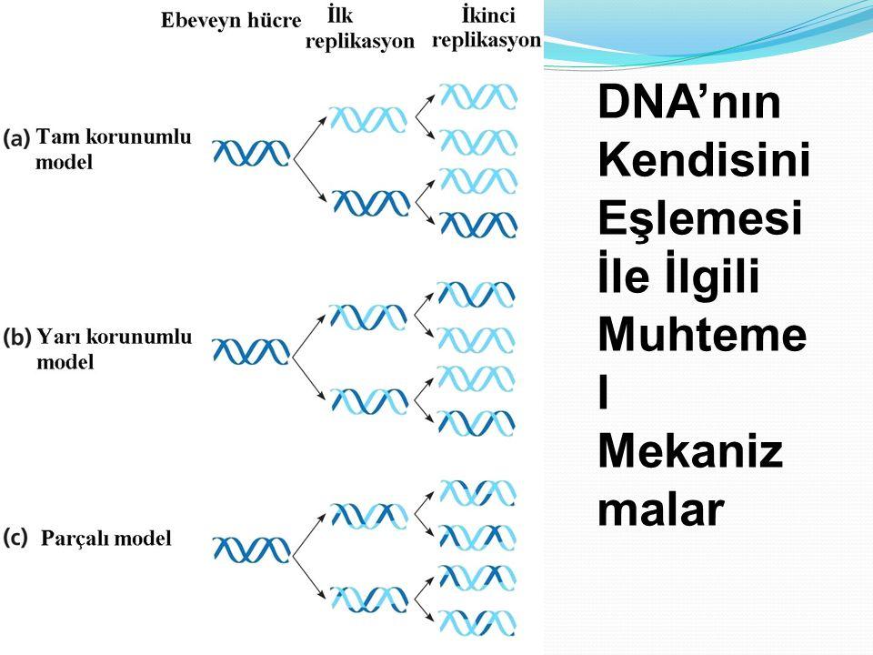 DNA'nın Kendisini Eşlemesi İle İlgili Muhtemel Mekanizmalar