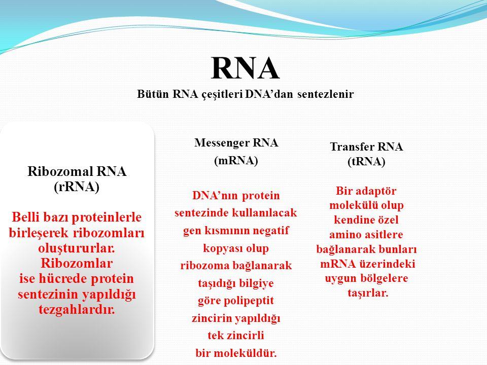 Bütün RNA çeşitleri DNA'dan sentezlenir