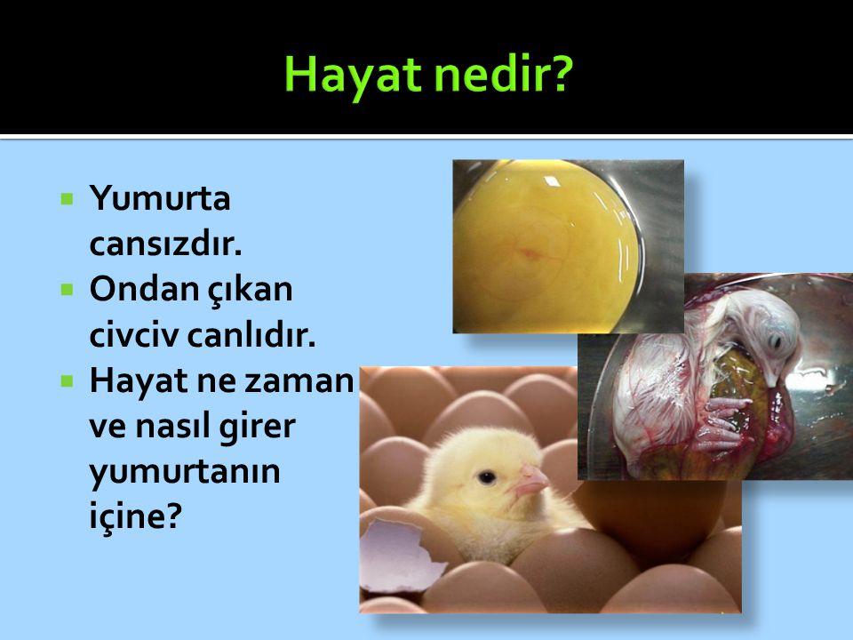 Hayat nedir Yumurta cansızdır. Ondan çıkan civciv canlıdır.