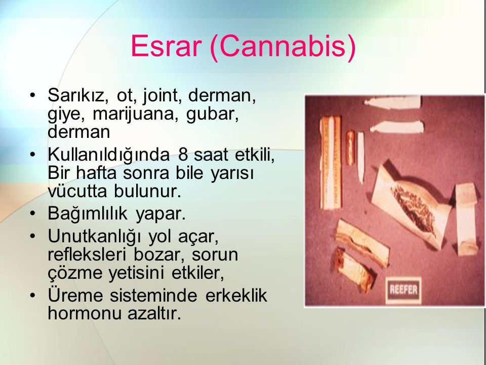 Esrar (Cannabis) Sarıkız, ot, joint, derman, giye, marijuana, gubar, derman.
