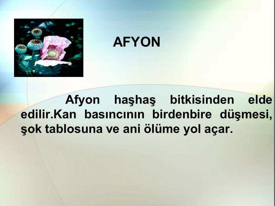 AFYON Afyon haşhaş bitkisinden elde edilir.Kan basıncının birdenbire düşmesi, şok tablosuna ve ani ölüme yol açar.