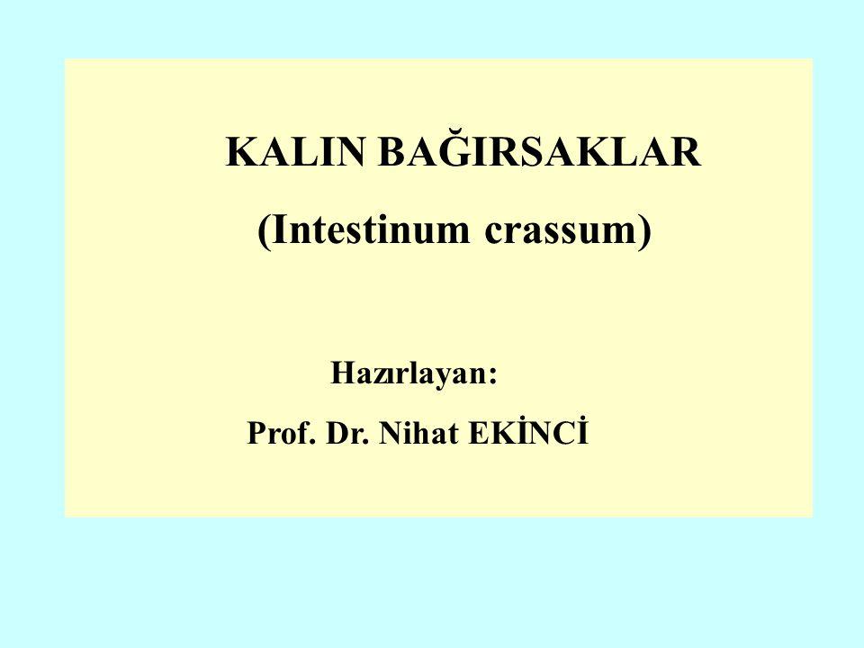 (Intestinum crassum) Hazırlayan: Prof. Dr. Nihat EKİNCİ
