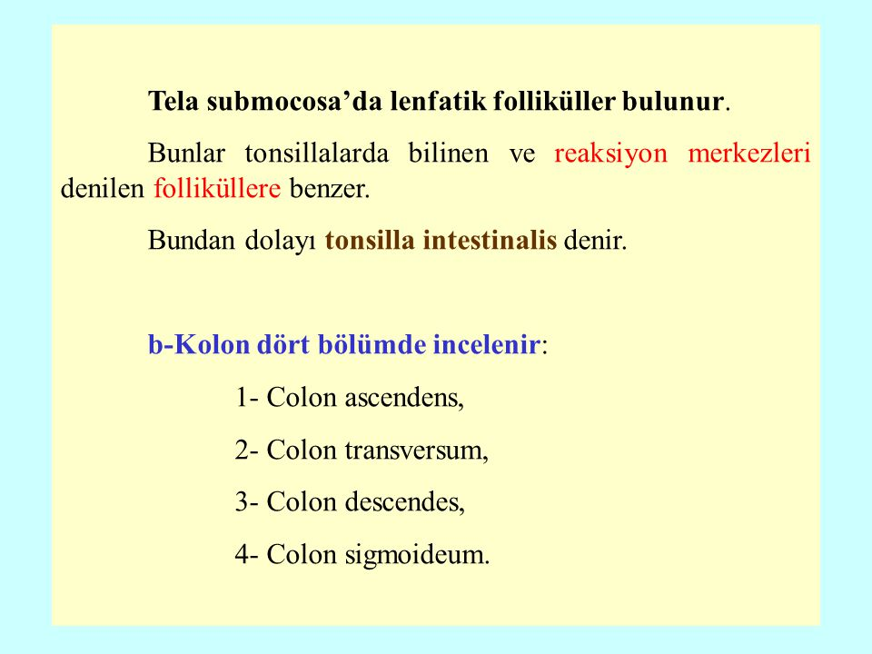 Tela submocosa'da lenfatik folliküller bulunur.
