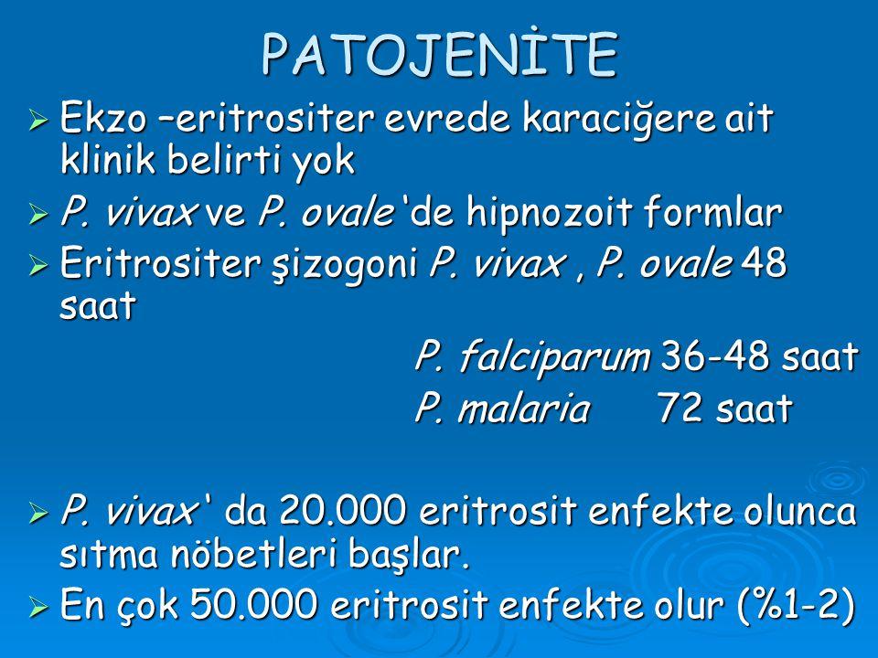 PATOJENİTE Ekzo –eritrositer evrede karaciğere ait klinik belirti yok