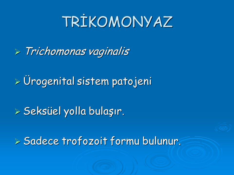 TRİKOMONYAZ Trichomonas vaginalis Ürogenital sistem patojeni