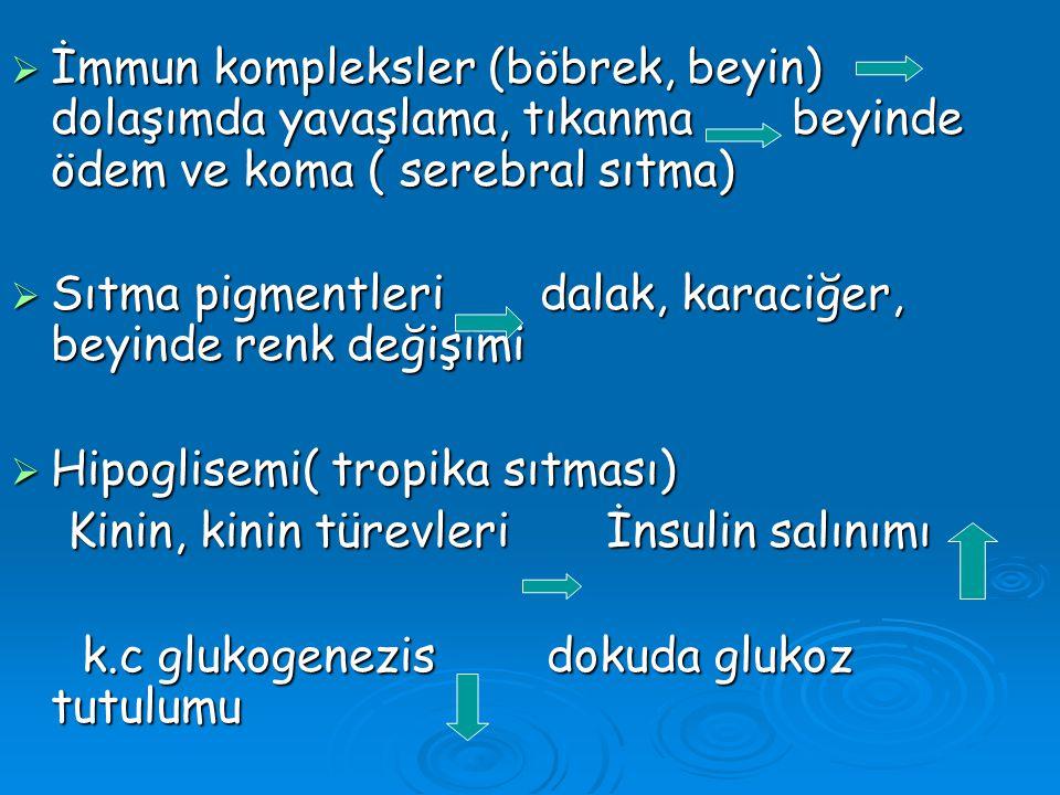 İmmun kompleksler (böbrek, beyin) dolaşımda yavaşlama, tıkanma beyinde ödem ve koma ( serebral sıtma)