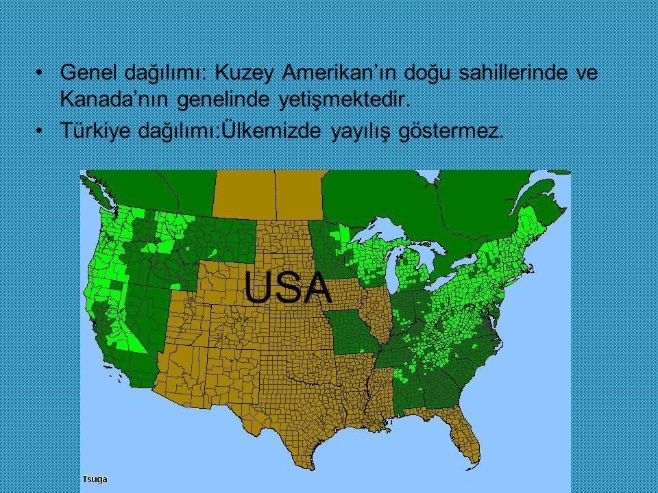Genel dağılımı: Kuzey Amerikan'ın doğu sahillerinde ve Kanada'nın genelinde yetişmektedir.