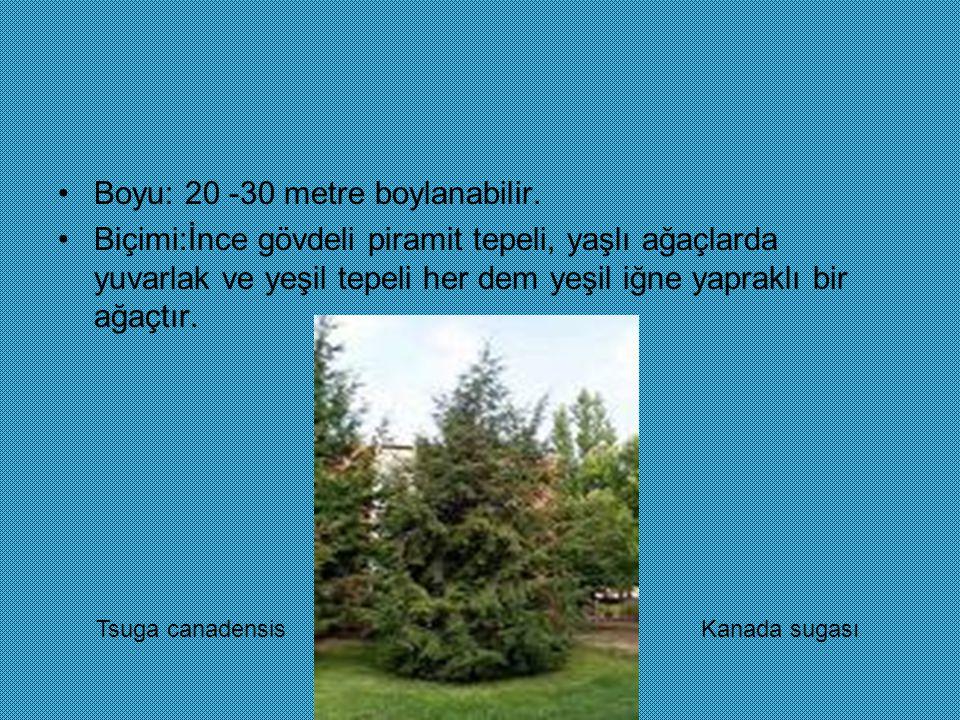 Boyu: 20 -30 metre boylanabilir.