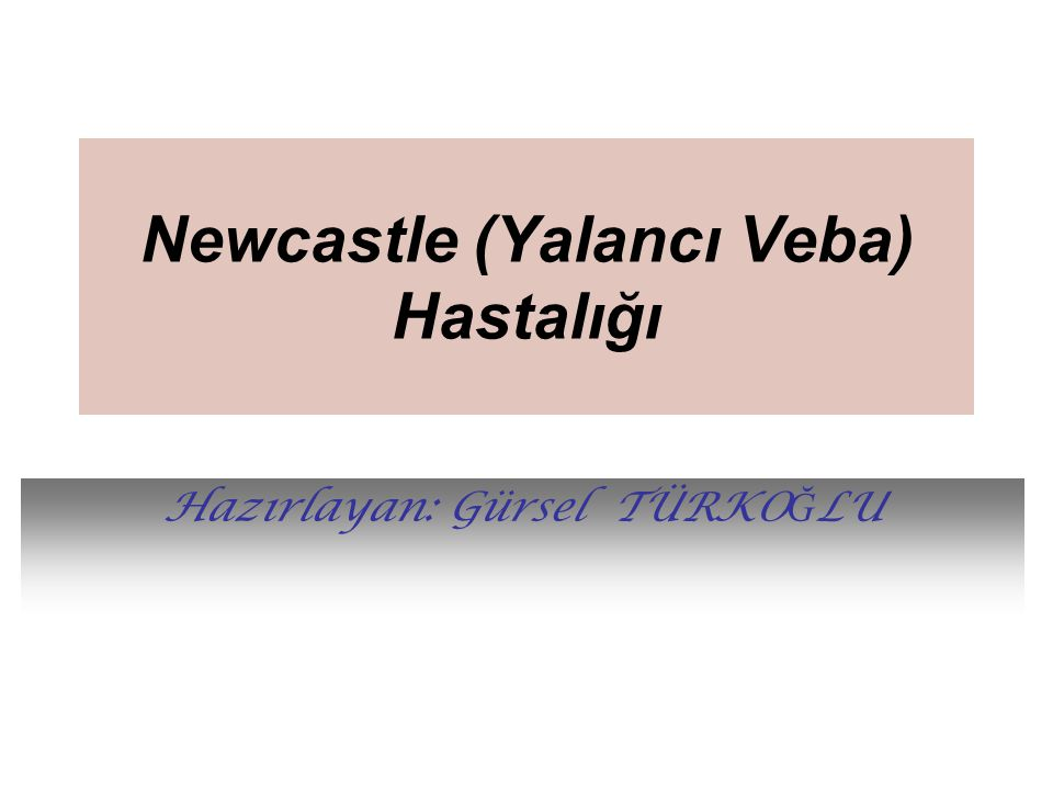 Newcastle (Yalancı Veba) Hastalığı