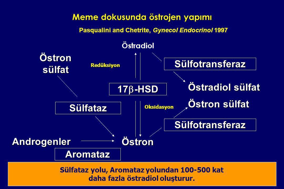 Meme dokusunda östrojen yapımı