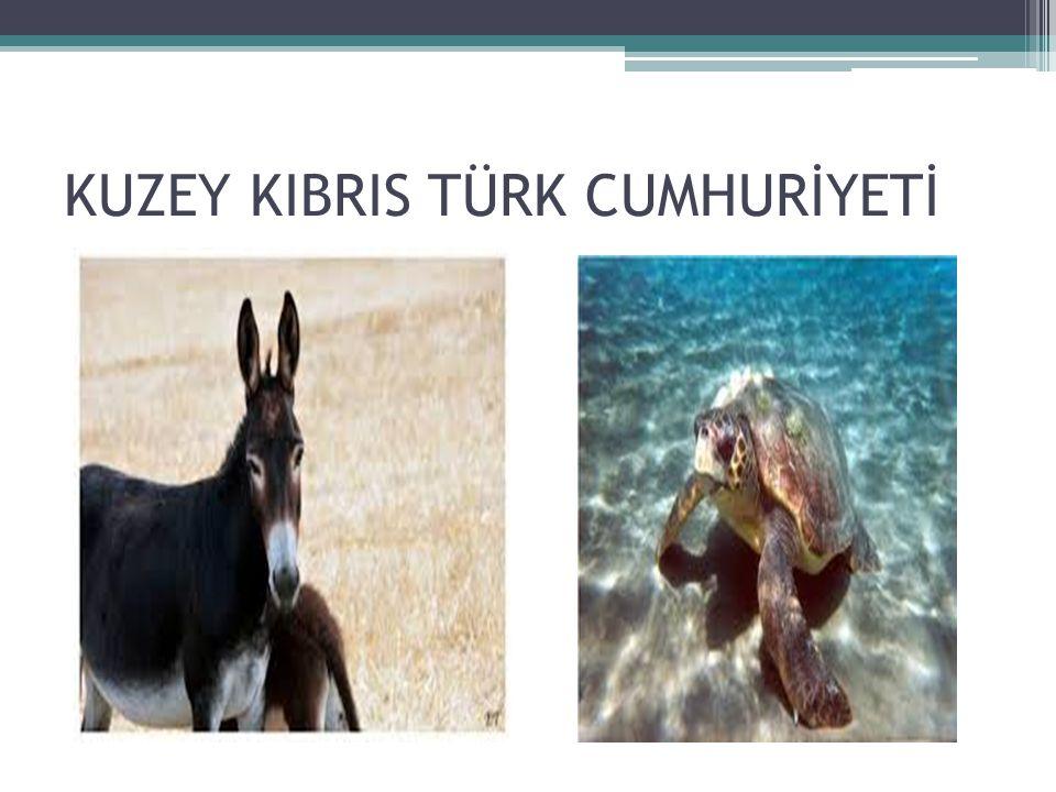 KUZEY KIBRIS TÜRK CUMHURİYETİ