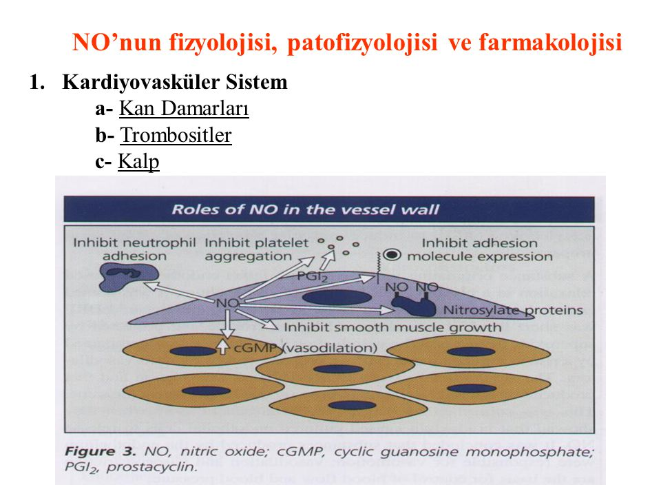 NO'nun fizyolojisi, patofizyolojisi ve farmakolojisi