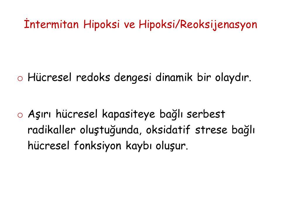 İntermitan Hipoksi ve Hipoksi/Reoksijenasyon