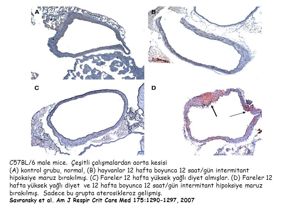 C57BL/6 male mice. Çeşitli çalışmalardan aorta kesisi
