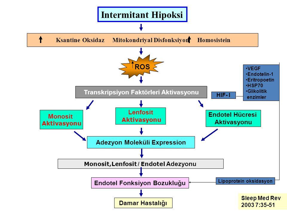 Intermitant Hipoksi ROS