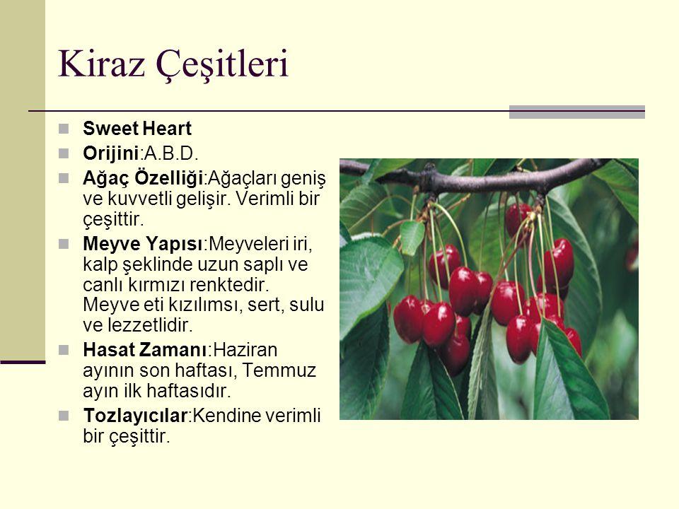 Kiraz Çeşitleri Sweet Heart Orijini:A.B.D.