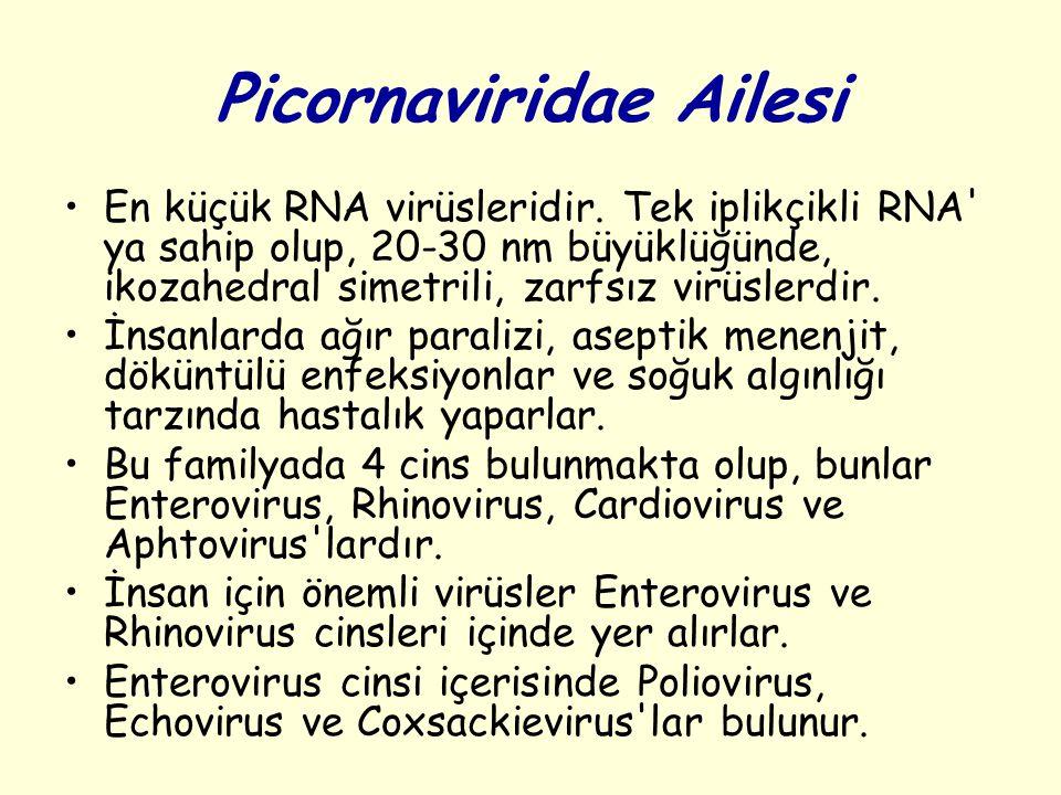 Picornaviridae Ailesi