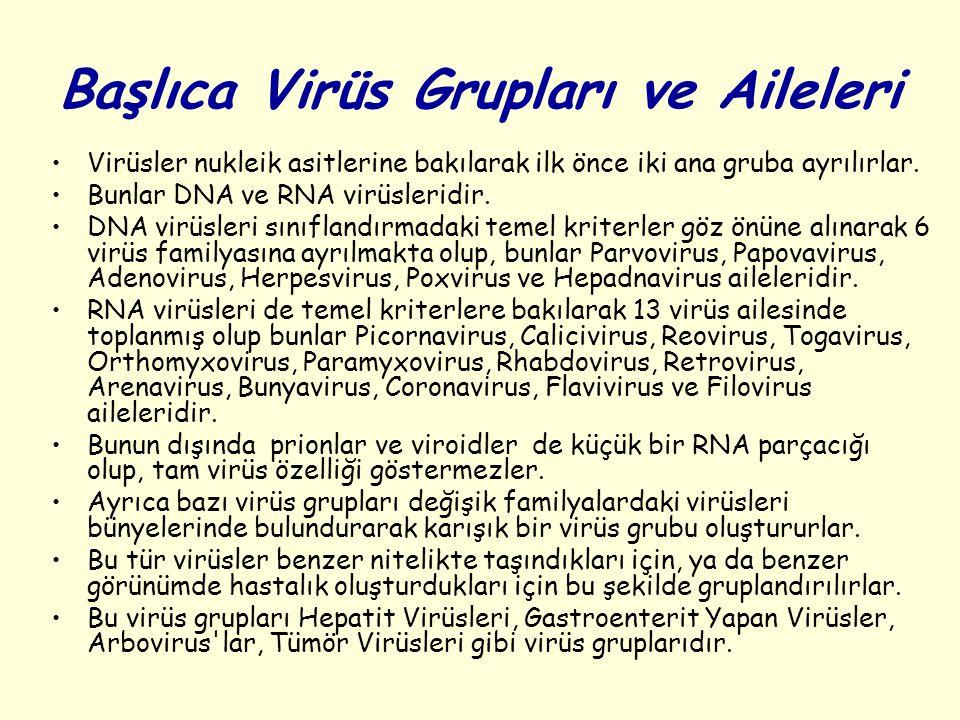 Başlıca Virüs Grupları ve Aileleri