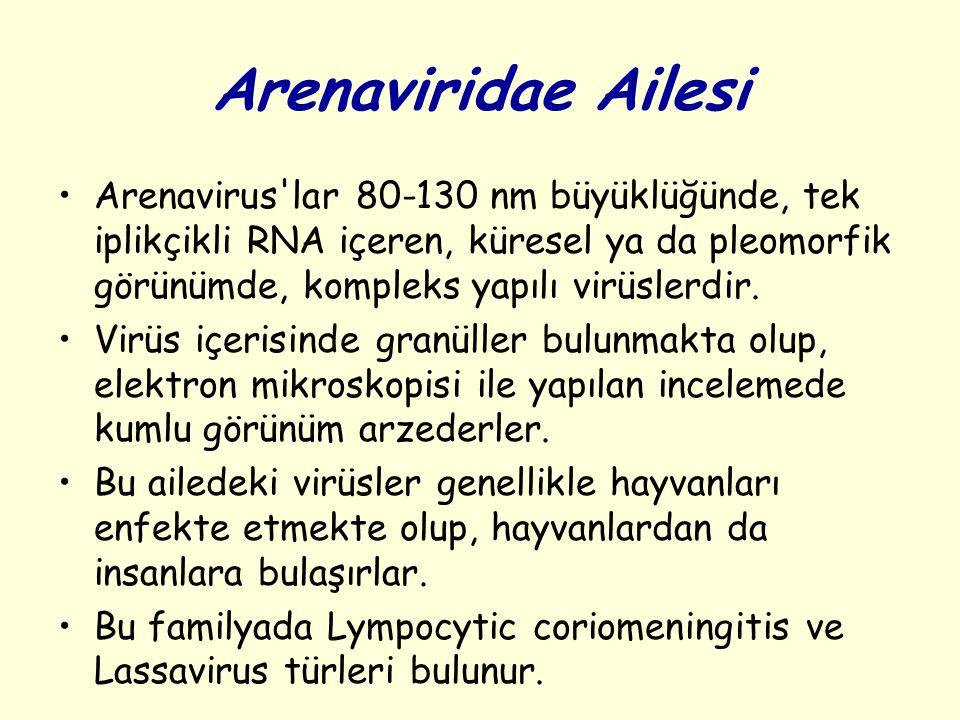 Arenaviridae Ailesi
