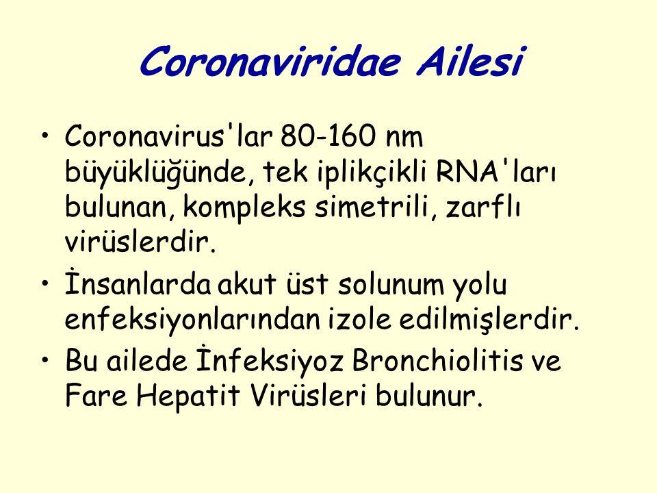 Coronaviridae Ailesi Coronavirus lar 80-160 nm büyüklüğünde, tek iplikçikli RNA ları bulunan, kompleks simetrili, zarflı virüslerdir.