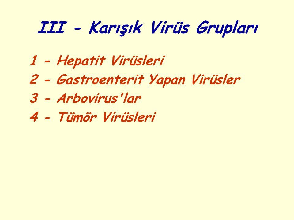 III - Karışık Virüs Grupları