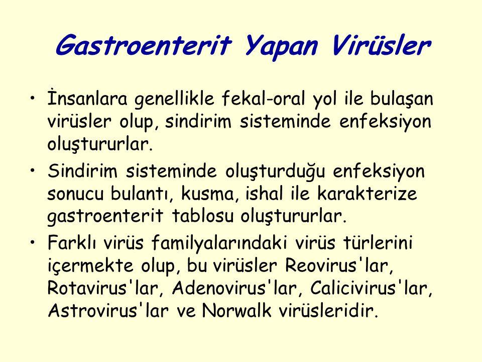 Gastroenterit Yapan Virüsler