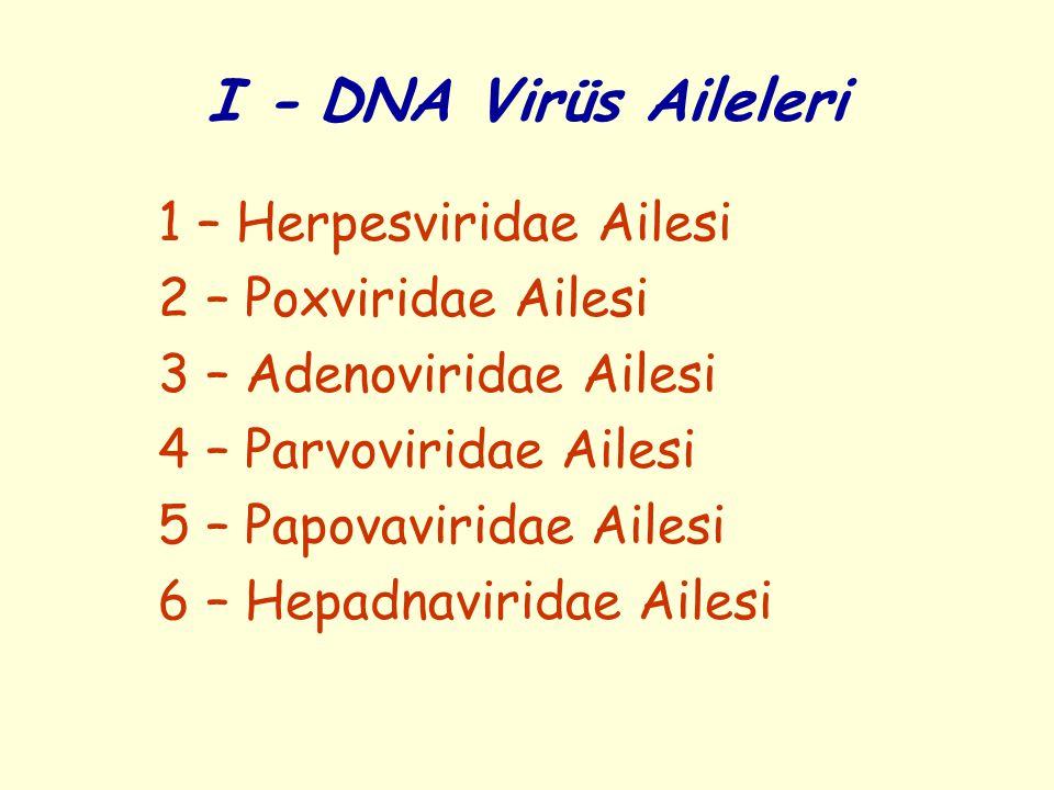 I - DNA Virüs Aileleri 1 – Herpesviridae Ailesi 2 – Poxviridae Ailesi