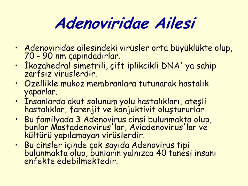 Adenoviridae Ailesi Adenoviridae ailesindeki virüsler orta büyüklükte olup, 70 - 90 nm çapındadırlar.