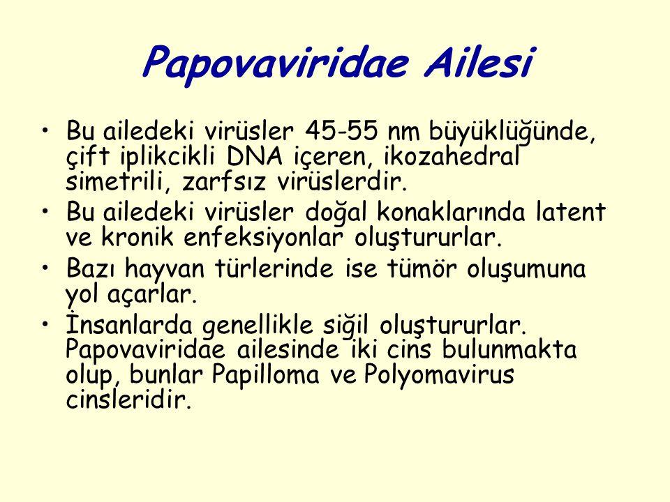 Papovaviridae Ailesi Bu ailedeki virüsler 45-55 nm büyüklüğünde, çift iplikcikli DNA içeren, ikozahedral simetrili, zarfsız virüslerdir.