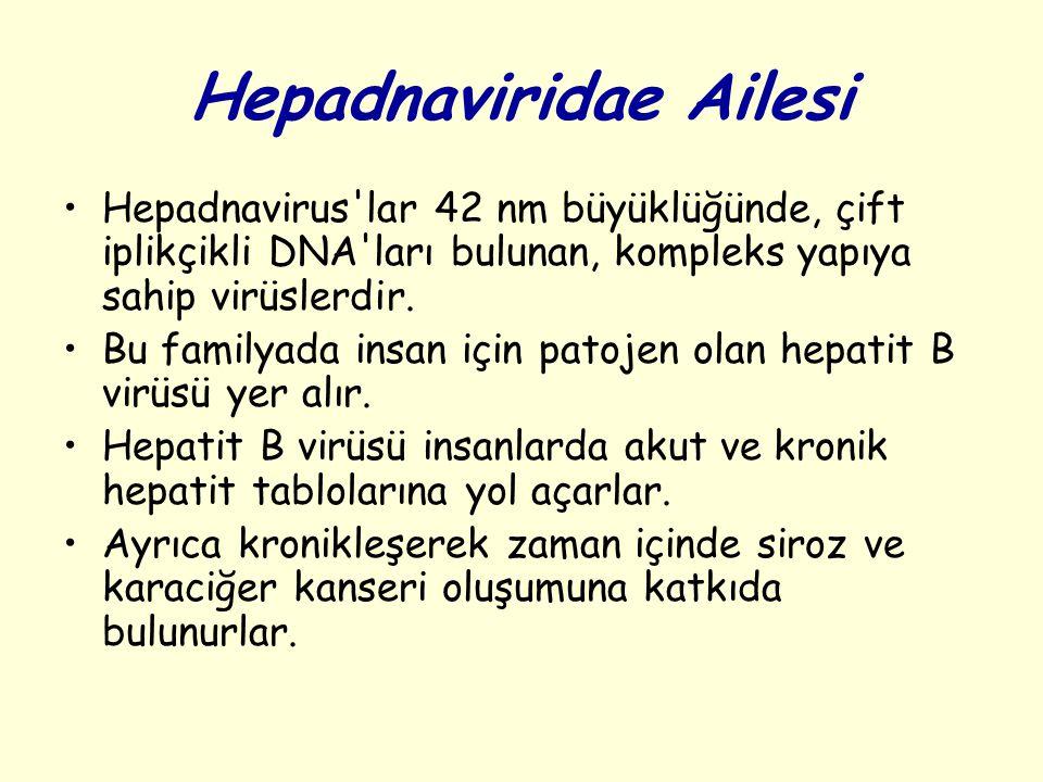 Hepadnaviridae Ailesi