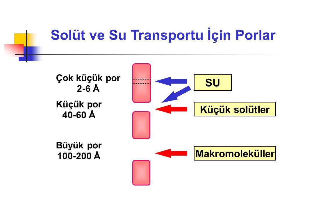 Solüt ve Su Transportu İçin Porlar