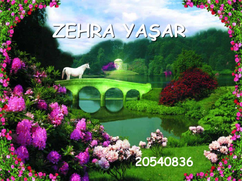 ZEHRA YAŞAR 20540836