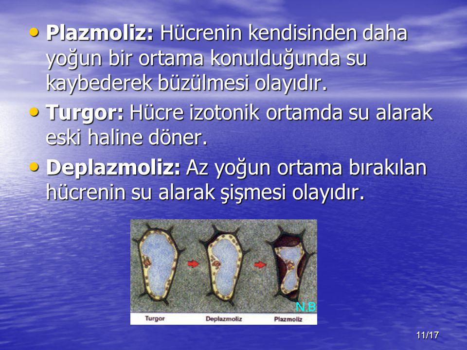 Plazmoliz: Hücrenin kendisinden daha yoğun bir ortama konulduğunda su kaybederek büzülmesi olayıdır.