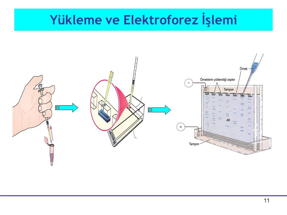Yükleme ve Elektroforez İşlemi