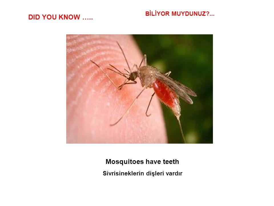 Sivrisineklerin dişleri vardır