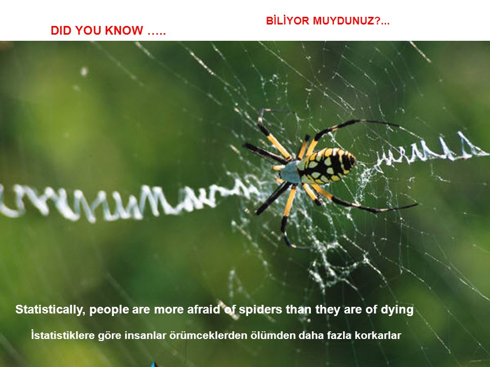BİLİYOR MUYDUNUZ ... DID YOU KNOW ….. Statistically, people are more afraid of spiders than they are of dying.