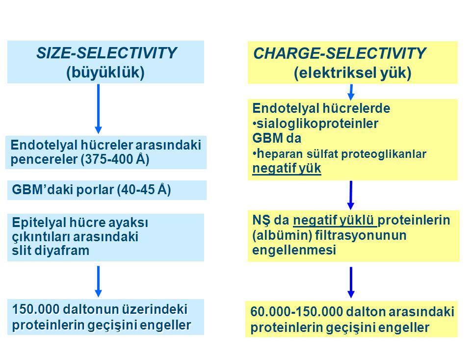 SIZE-SELECTIVITY (büyüklük) (elektriksel yük)