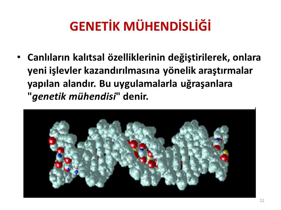 GENETİK MÜHENDİSLİĞİ